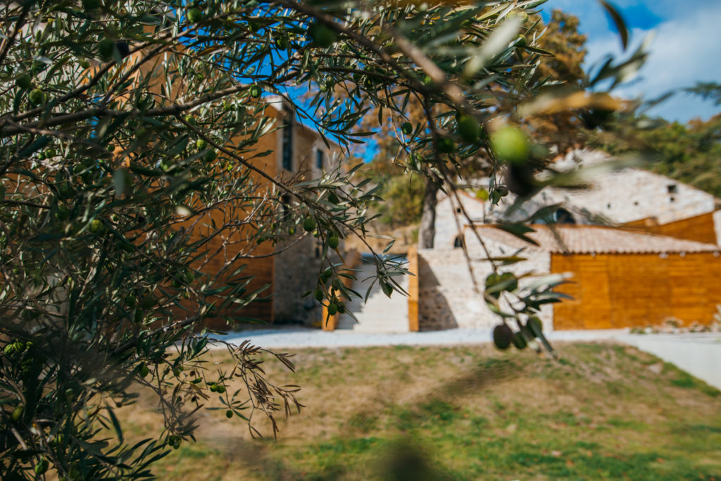 olivier france merlac sud nature